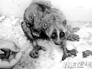 国家一级保护动物被虐待丢弃