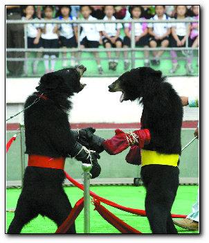 动物艺术节开演