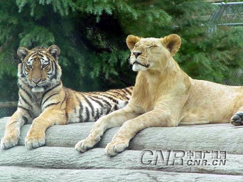 寒潮乍到 上海野生动物园小动物们御寒有招