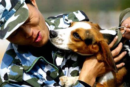 广州检疫犬鼻子能识上千气味(组图)