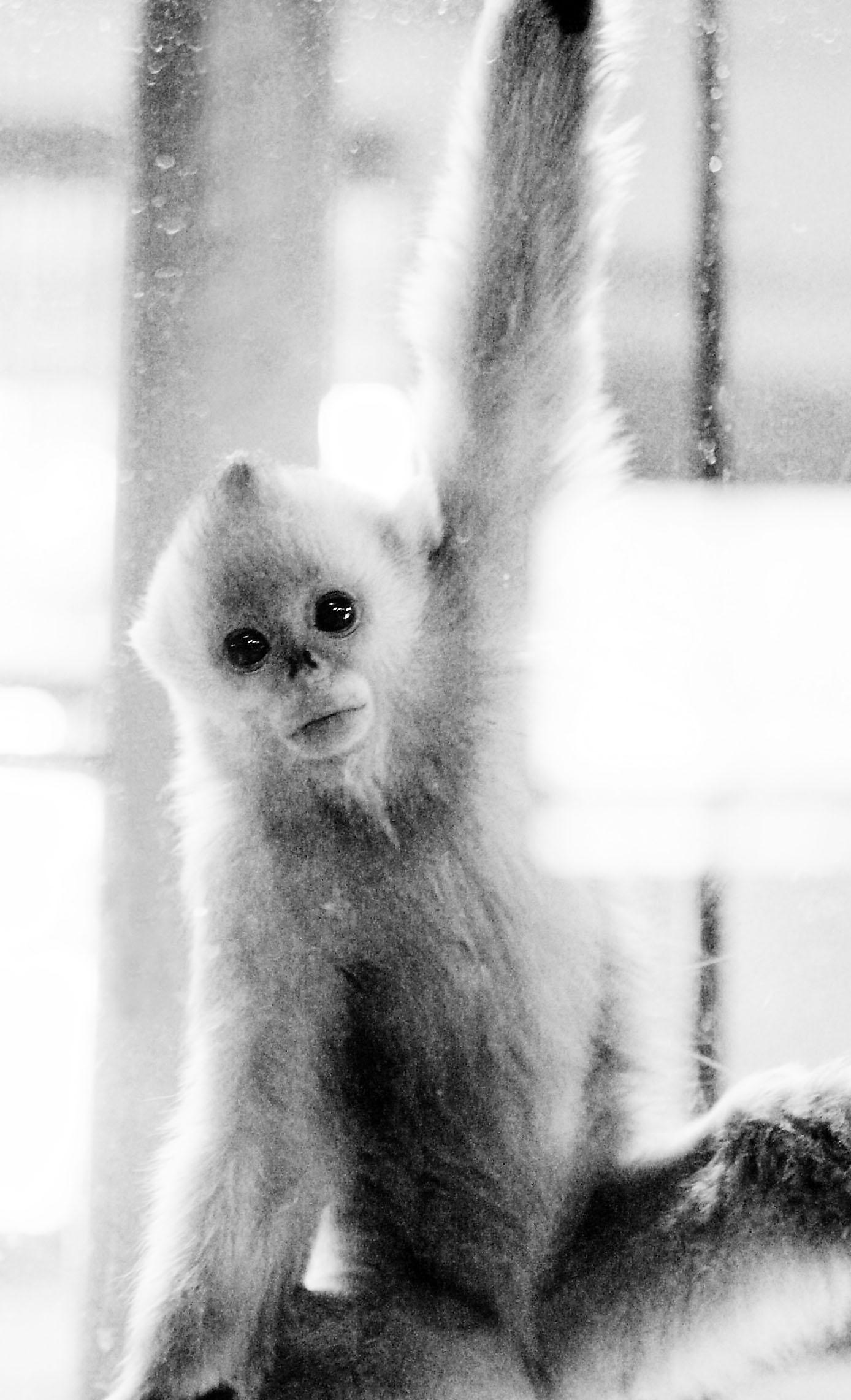 """动物园的""""小宝宝""""(组图)"""
