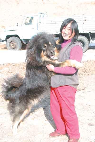 藏獒吃主人_因为体形威猛,对主人有高度的服从性,爱憎分明,今年,藏獒被公安部纳入