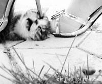 虐猫女子与网友对话记录曝光:我踩猫怎么啦