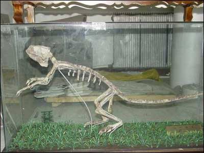 倒卖文物罪_网上叫卖恐龙化石 警方称已构成贩卖文物罪(图)