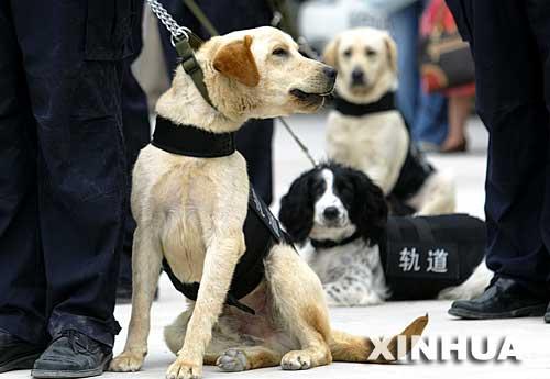 中国公安首支地铁警犬队伍在上海成立[组图]