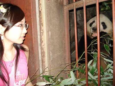 """超车时两车相撞8人受伤、熊猫""""妞妞""""重返故里"""