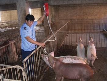 猪的剪法步骤图