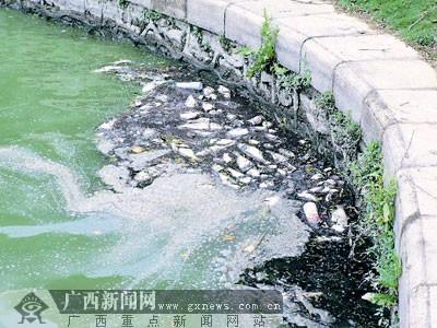 宁南湖受污染鱼儿大量死亡 顾大局暂不换水(图