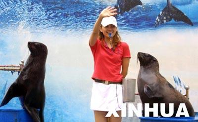 林妹妹和她的海狮宝贝