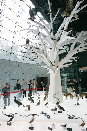 图文:西湖博物馆内陈列的动物标本