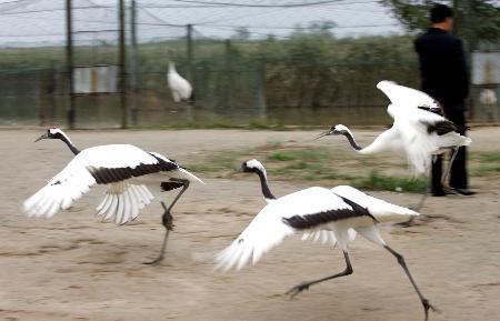 目前区内有379种鸟类,国家一级重点保护野生动物12种,是世界上鸟类