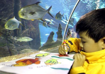 """图文:(3)海底世界""""上演""""少儿绘画大赛"""