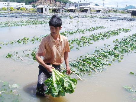 图文:广东菜农在被淹没的菜园里查看损失