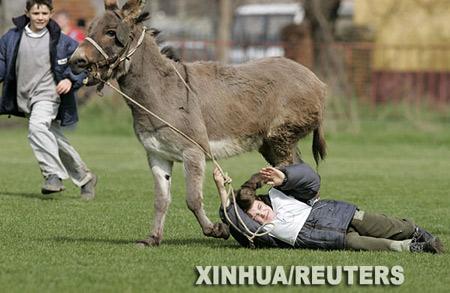 梦见骑在驴背上