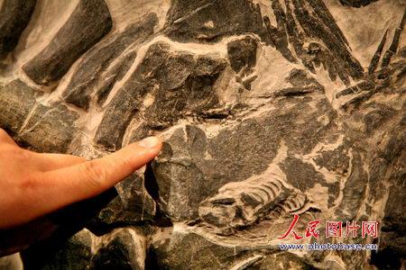 贵州发现酷似中国神话龙的古生物化石(组图)