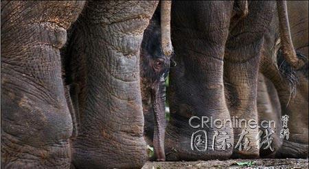 动物趣图集锦:它们的生活很精彩(2)