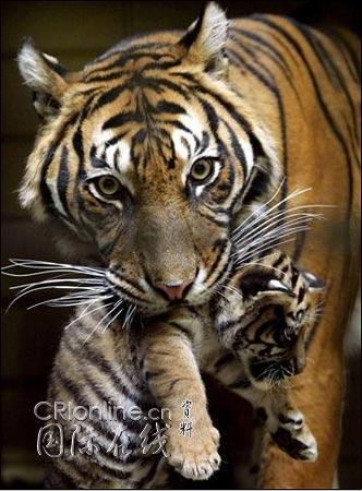 动物趣图集锦:它们的生活很精彩(3)