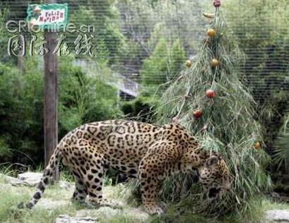 """动物园里的""""圣诞节水果大餐""""(组图)"""
