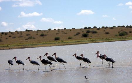组图:肯尼亚内罗毕野生动物园