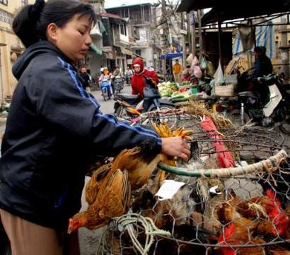 越南今天出现3个星期以来第6例禽流感死亡病例