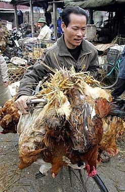韩国政府称如果朝鲜提出要求将协助消除禽流感