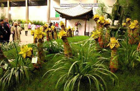 欣赏中国云南省展览的花卉-比利时根特国际花卉博览会开幕