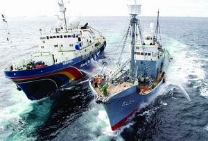 环保组织大战日本捕鲸船