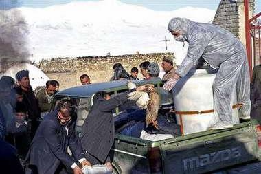 伊朗135只野天鹅死于H5N1型禽流感病毒(图)