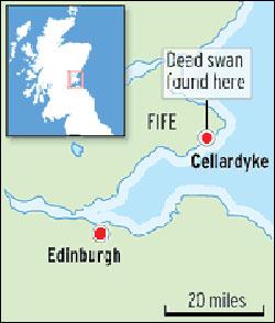 禽流感跨国英吉利海峡苏格兰首次出现疫情