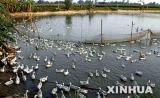 韩国发生今年第4起高致病性禽流感疫情(图)