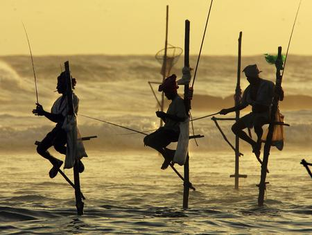 圖文:斯里蘭卡漁民站在竹竿上打魚