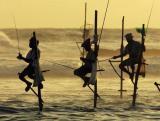 图文:斯里兰卡渔民站在竹竿上打鱼