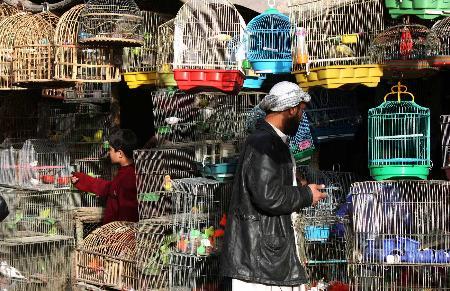 图文:阿富汗首都喀布尔街头一家卖鸟的商铺