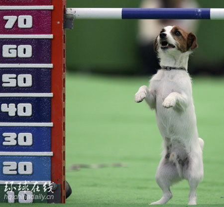 组图:日本东京举行超级狗狗嘉年华