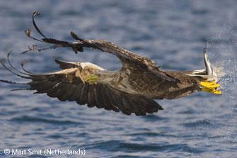 图文:青少年15至17岁组-捕食的鹰