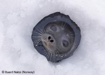 图文:票选第二名-冰洞与海豹