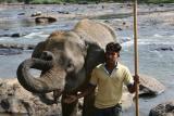 图文:小象传友谊(1)