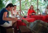 图文:塞舌尔餐馆一只大海龟向游客讨食