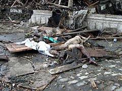 印尼班达亚齐海啸灾区未清理的尸体