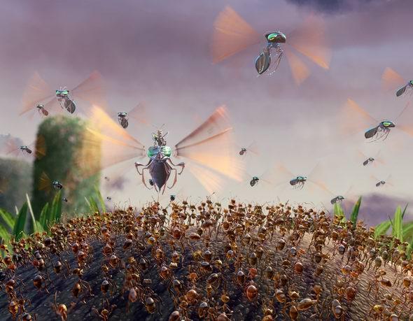 资料图片:动画片《别惹蚂蚁》精美剧照(18)