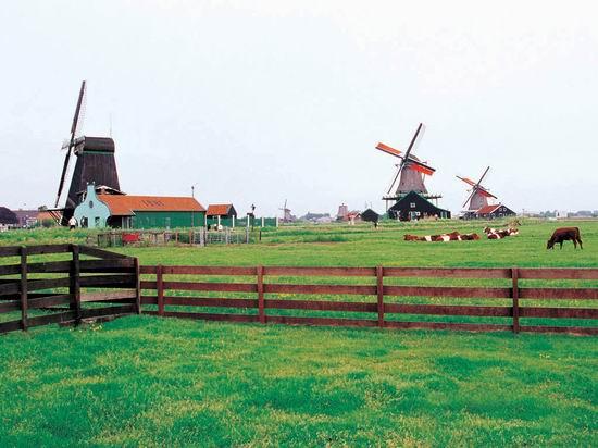 电影中的顶级风景--《雏菊》荷兰(组图)