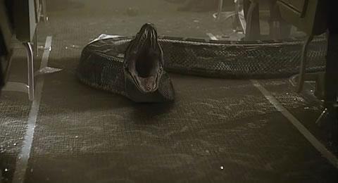 无数的毒蛇在飞机上游走,探员必须和菜鸟飞行员,被吓得半死不活的乘务