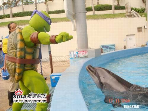 组图:忍者龟到海洋公园任亲善大使和海豚亲吻