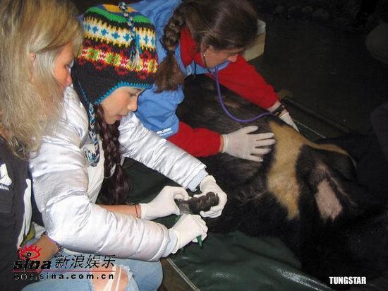 组图:莫文蔚认养重伤黑熊为宝贝剪指甲洗耳朵