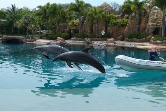 组图:青春之星澳洲之旅观赏海豚精彩表演
