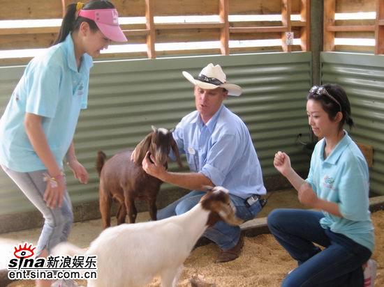 图文:青春之星农庄之旅--要喂小羊了有点胆怯