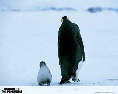 陶红献声《帝企鹅日记》:给动物配音太难(图)