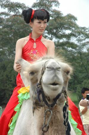 动物在美女面前的不雅行为:骆驼口水和马尿
