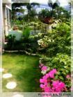 我家的花园