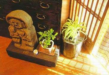 情趣植物--用天然情趣装扮你的家(用具)_新浪房荒野组图淘宝图片